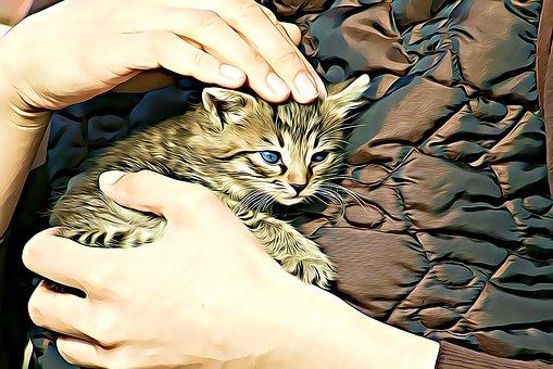 Digital, Graphics, Kitten, Cat, Pets, Fauna, Felines