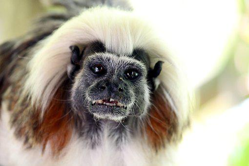Liszt äffchen, Free Gehege, Zoo, Park, Animals, Nature