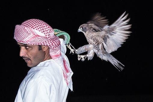 Falcon, Motion, Eagle, Hawk, Animal, Feather, Fly