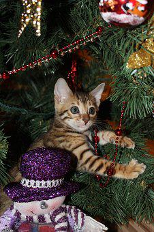 Kitten, New Year's Eve, Christmas, Holiday, Ornament