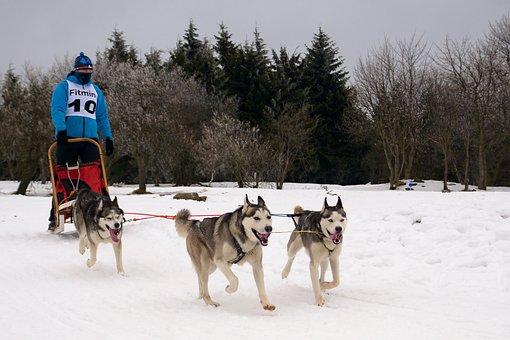 Snow, Races, Sled, Dog, Sleigh, Mushing