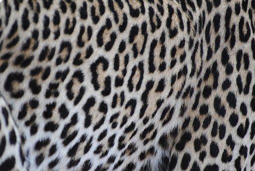 Leopard, Fur, Pattern, Cat, Wildcat, Nature