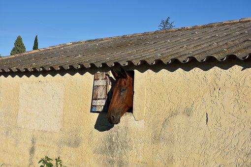 Balm Of Venice, Horse, Window