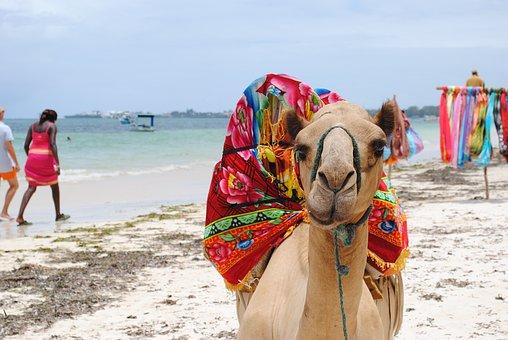 Camel, Kenya, Africa, Beach, Sea