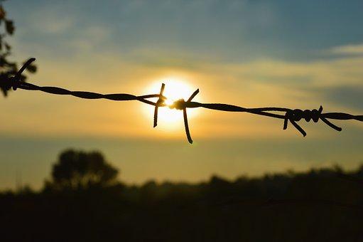 Caught, Captivity, Liberation, Free, Rip, Sun, Wire