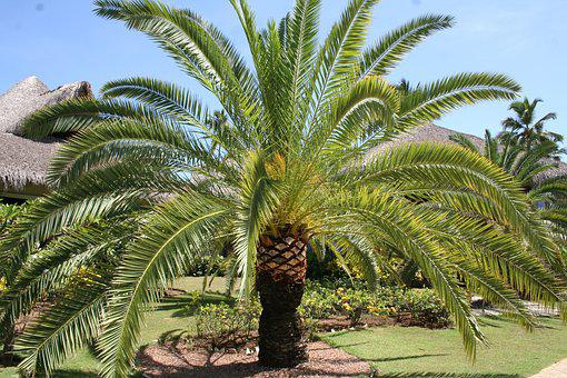 Caribbean, Palm, Holiday, Dominican Republic, Palm Tree