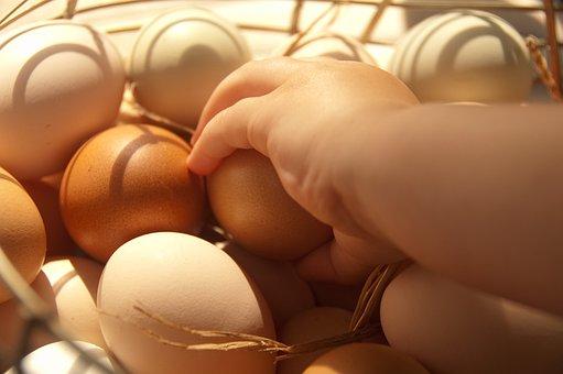 Eggs, Farm, Food, Organic, Healthy, Natural, Chicken