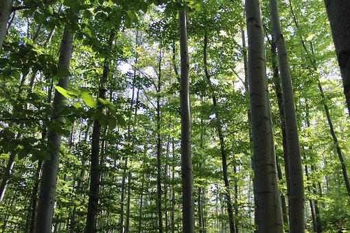 Forest, Trees, Green, Nature, Environment, Leaf
