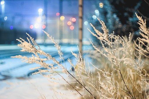 Snow, Bush, Light, Nature, Cold, Winter, Natural