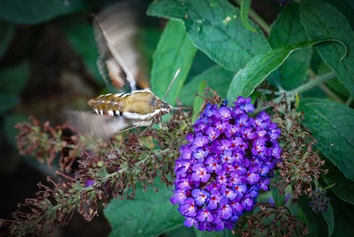 Flower, Purple Flower, Nature, Butterfly, Insects
