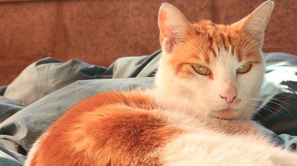 Cat, Pet, Bed, Siesta, Lying