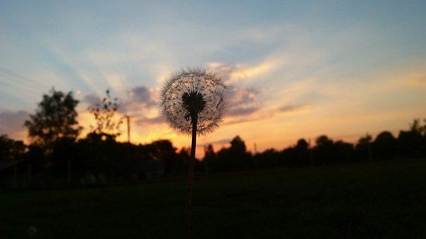 Sunset, Dandelion, The Plot, West, The Sun