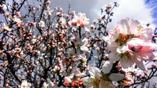 Flowers, Spring, Coming Soon