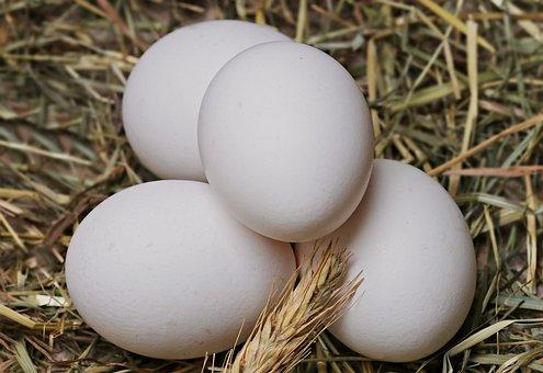 Egg, Straw, Food, Eat, Healthy, Edible, Delicious