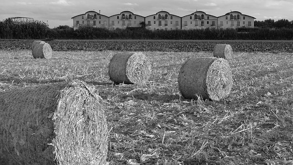 Field, Straw Bales, Campaign, Fields, Bales, Round