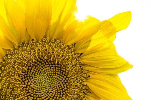Plant, Nature, Leaf, Flower, Season, Summer, Yellow