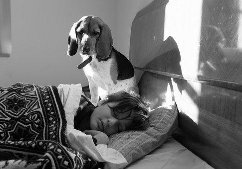 Dog, Kid, Friend, Sleep, Pet, Italy, Ears, Tenderness