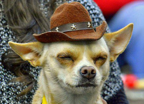 Dog, Hat, Adorable, Listen, Funny, Music Obsessives