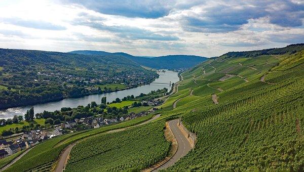 Graach, Sheep Farm, Mosel, Sachsen, Germany, Wine