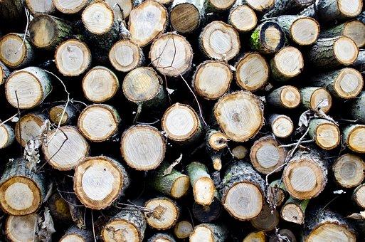 Strom, Stromy, řez, Plátky, Příroda, Lesy, Dřevo, Hnědý