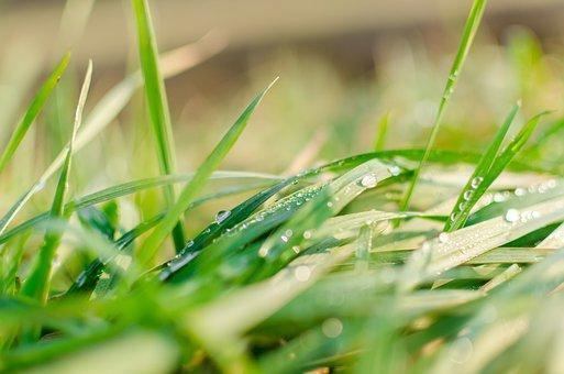 Makro, Příroda, Rosy, Zelené, Déšť, Voda, Tráva