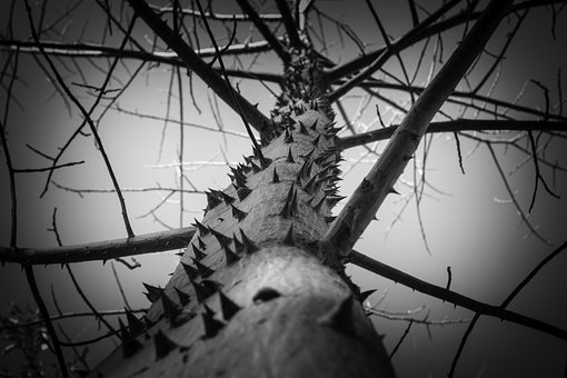 Tree, Thorns, Greatness, Nature, Texture, Plant