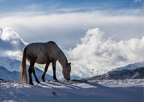 Winter, Azerbaijan, Horse, Landscape, Mountain, Snow