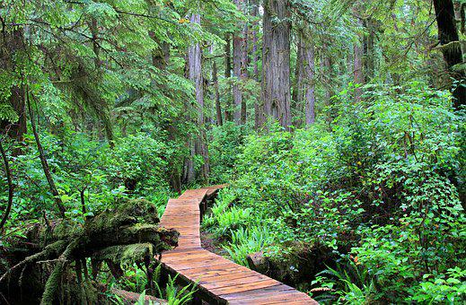 Rainforest, Away, Canada, Vancouver Island, Forest