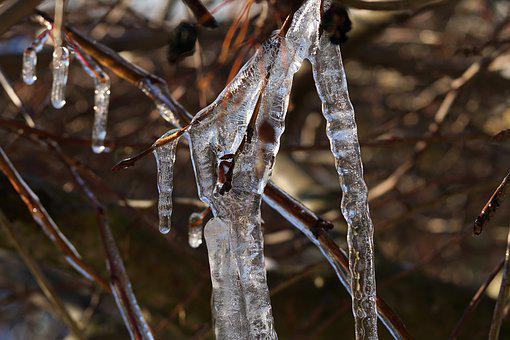Ice, Winter, Cold, Icicle, Frost, Tree, Branch, Frosty
