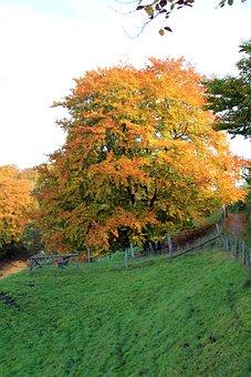 Teutoburg Forest, Autumn, Tree, Landscape, Away, Fence