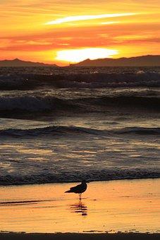 Sunset, California, Pacific, Coast, Huntington, Beach