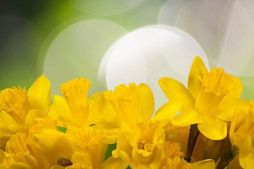 Daffodil, Spring, Easter, Blossom, Bloom, Yellow