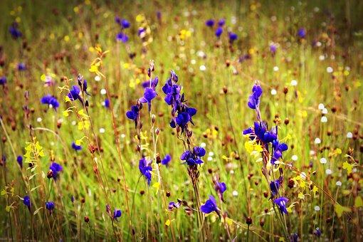 Flower, Field, Wild, Outdoor, Closeup, Thailand