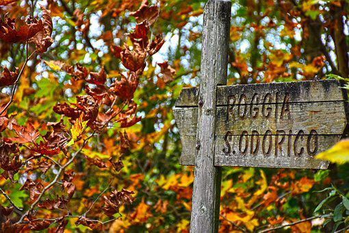 Forest, Autumn, Autumn Woods, Nature, Leaves, Underwood