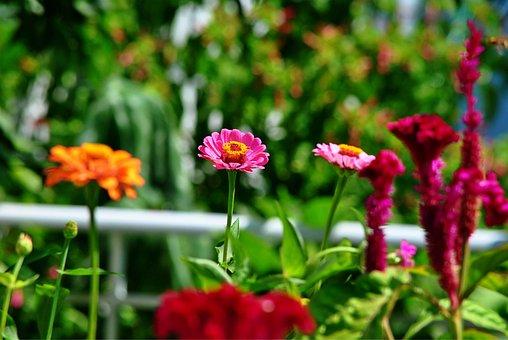 Flowers, Macro, Nature, Garden, Blossom, Flora, Spring