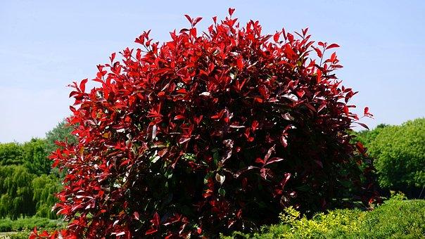 Leaves, Red, Bush, Nature, Leaf, Fall Leaves