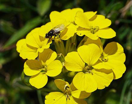Mountain Flowers, Yellow, Alpine, High Position, Fly