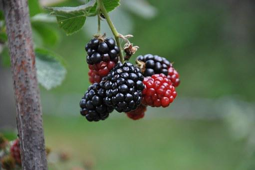 Red, Black, Green, Mulberry, Blackberry, Nostalgia