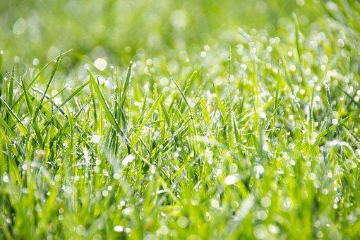 Grass, Green, The Freshness, Wallpaper, Summer, Bokeh
