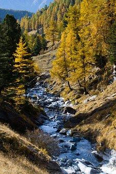 Leaves, Autumn, Forest, Mountain, Trail, Orange, Yellow