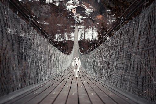 Dog, Animal, Pet, Walk, Schäfer Dog, Bridge, Leisure