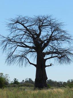 Africa, Baobab, Savannah, Safari, Tree, National Park