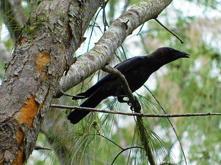 Crow, Bird, Branches, Crow On Branches, Nature, Raven