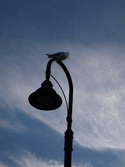 Silhouette, Bird, Lamp, Nature, Animal