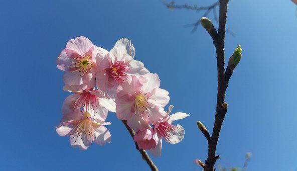 Flower, Blooming, Bl, Blossom, Floral, Petal, Garden