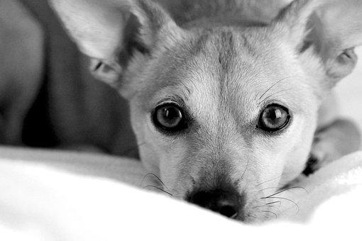 Eb, Dog, Animal, Pets, Nature, Cute, Four-legged, Small