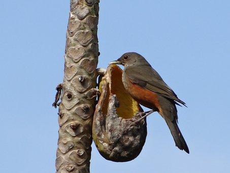 Creamy Orange, Eating, Papaya, Fruit, Sky, Blue, Bird