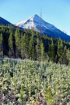 Regeneration, Forest, Peak, Regrowth, Landscape, Nature
