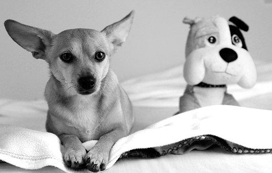 Eb, Dog, Animal, Pets, Nature, Cute, Four-legged, Love