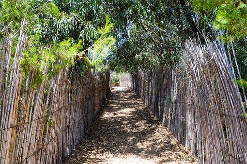 Bamboo, Sand, Beach, Sea, Nature, Summer, Flotsam